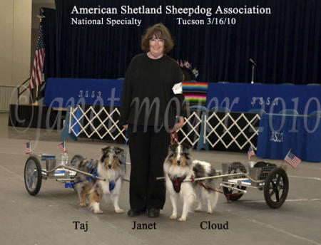 Janet Moyer, owner of Custom Dog Carts with Taj and Cloud, at the national Shetland Sheepdog Specialty dog show